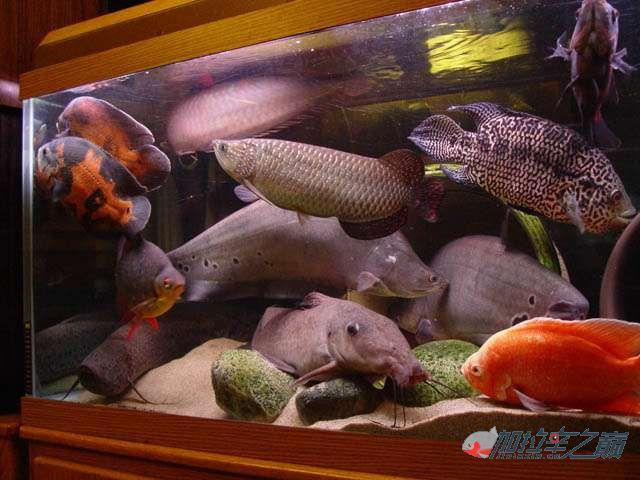 我的神啊不怕缺氧给憋死啊这样高密度养鱼 西安观赏鱼信息 西安博特第4张