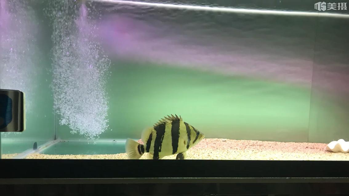 集体参加全明星 西安观赏鱼信息