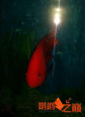 新人新手养了不到两个月 大混养 鱼儿都很和谐 西安龙鱼论坛 西安博特第1张