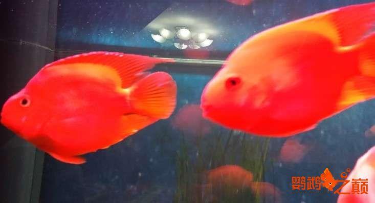 新人新手养了不到两个月 大混养 鱼儿都很和谐 西安龙鱼论坛 西安博特第2张