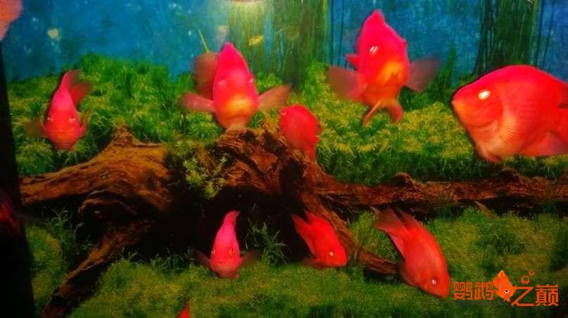新人新手养了不到两个月 大混养 鱼儿都很和谐 西安龙鱼论坛 西安博特第4张
