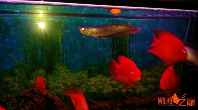 新人新手养了不到两个月 大混养 鱼儿都很和谐 西安龙鱼论坛 西安博特第5张
