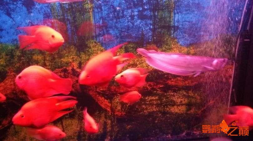 新人新手养了不到两个月 大混养 鱼儿都很和谐 西安龙鱼论坛 西安博特第8张