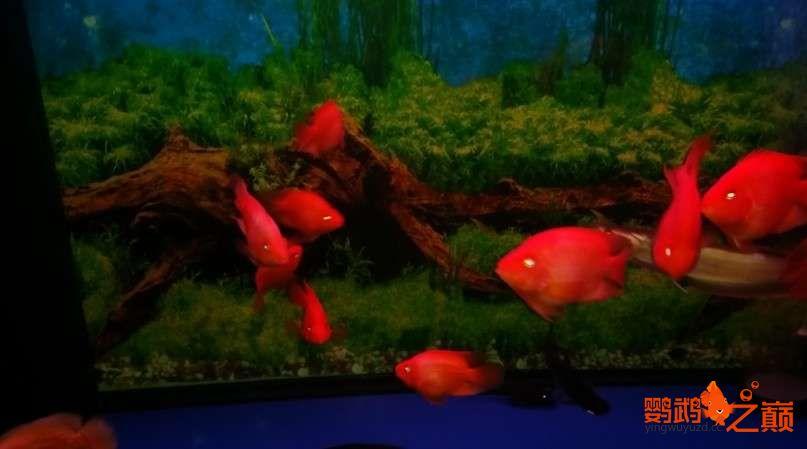 新人新手养了不到两个月 大混养 鱼儿都很和谐 西安龙鱼论坛 西安博特第6张