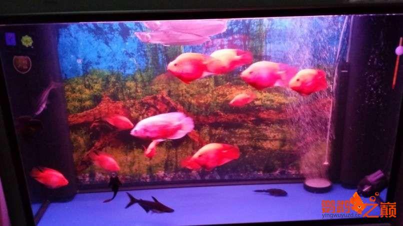 新人新手养了不到两个月 大混养 鱼儿都很和谐 西安龙鱼论坛 西安博特第9张