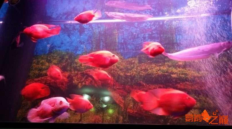新人新手养了不到两个月 大混养 鱼儿都很和谐 西安龙鱼论坛 西安博特第10张