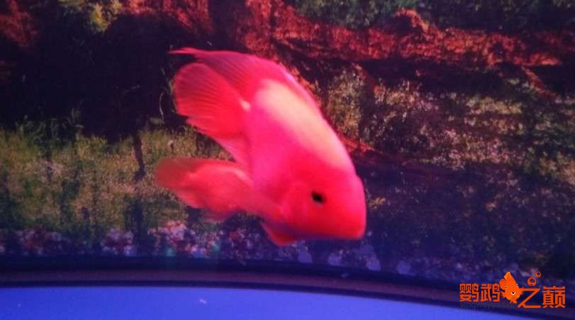 新人新手养了不到两个月 大混养 鱼儿都很和谐 西安龙鱼论坛 西安博特第14张