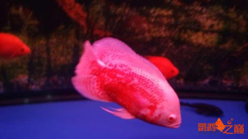 新人新手养了不到两个月 大混养 鱼儿都很和谐 西安龙鱼论坛 西安博特第15张