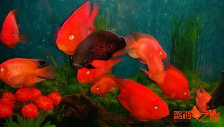 新人新手养了不到两个月 大混养 鱼儿都很和谐 西安龙鱼论坛 西安博特第19张