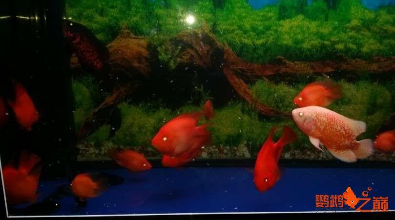 新人新手养了不到两个月 大混养 鱼儿都很和谐 西安龙鱼论坛 西安博特第17张