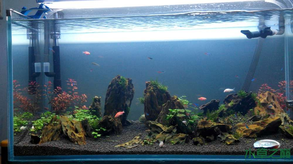 我的缸应该选多少瓦的水草架灯? 西安观赏鱼信息 西安博特第2张
