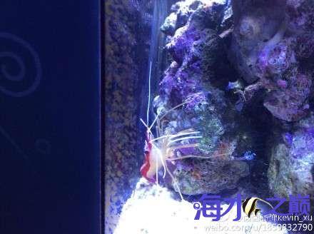 3030迷你缸又来了新伙伴 西安观赏鱼信息 西安博特第6张