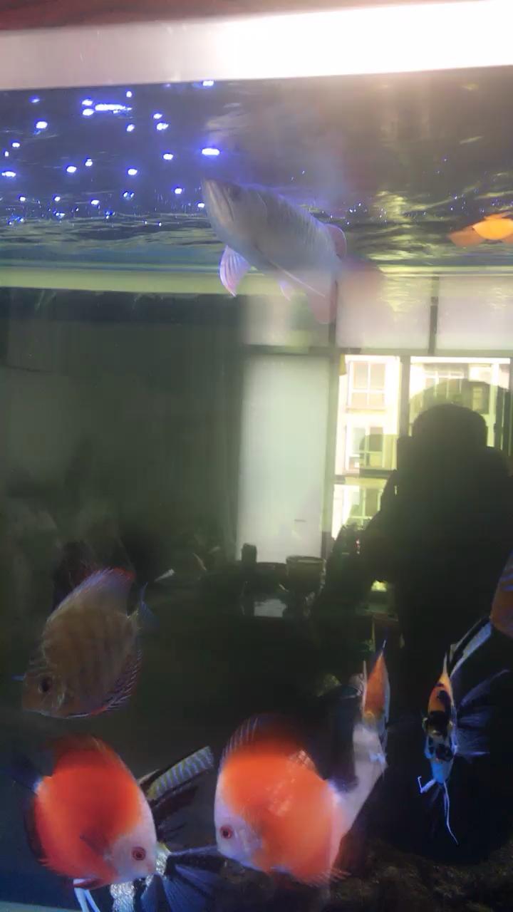 签个到贵州鱼友圈 西安龙鱼论坛 西安博特第1张