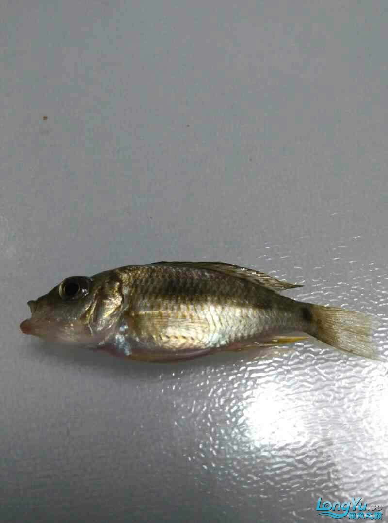 刚死的【西安热带鱼批发市场】 西安龙鱼论坛 西安博特第1张
