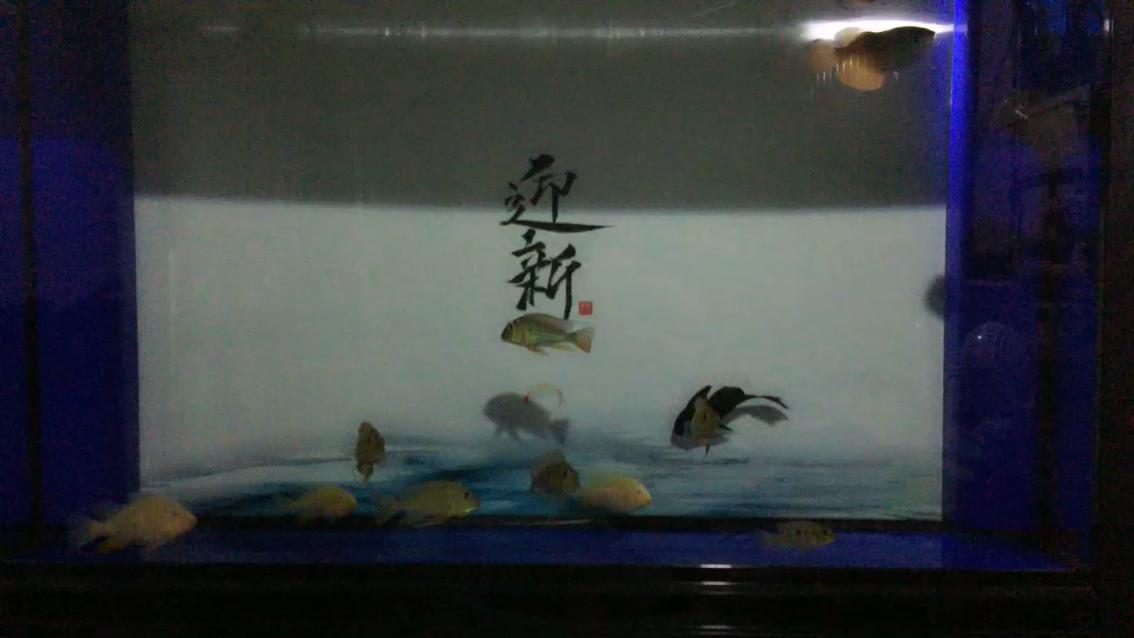 一边看鱼一边看球 西安龙鱼论坛 西安博特第1张