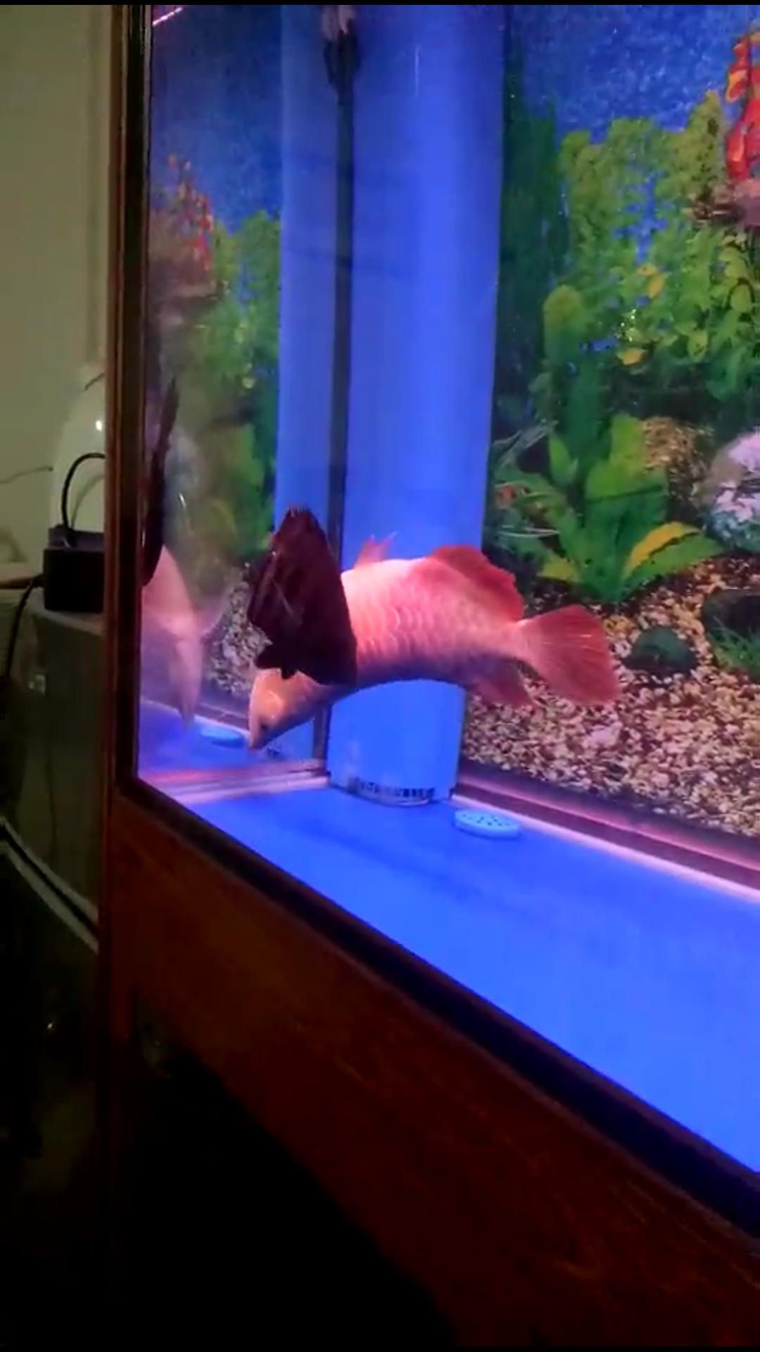 终究没有救活你 西安观赏鱼信息