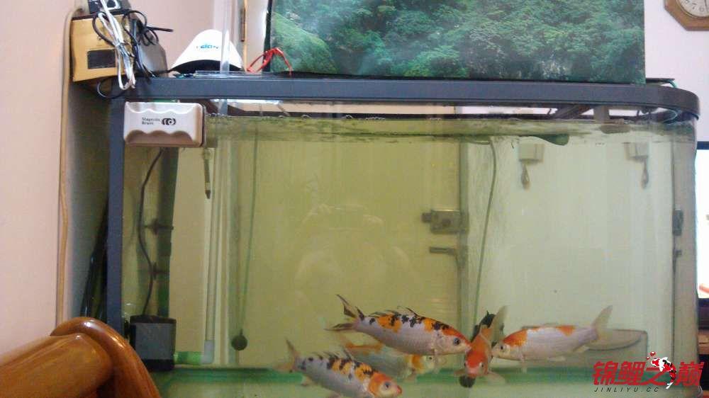 【西安泰虎鱼】滴滤盒加外套 西安龙鱼论坛 西安博特第1张