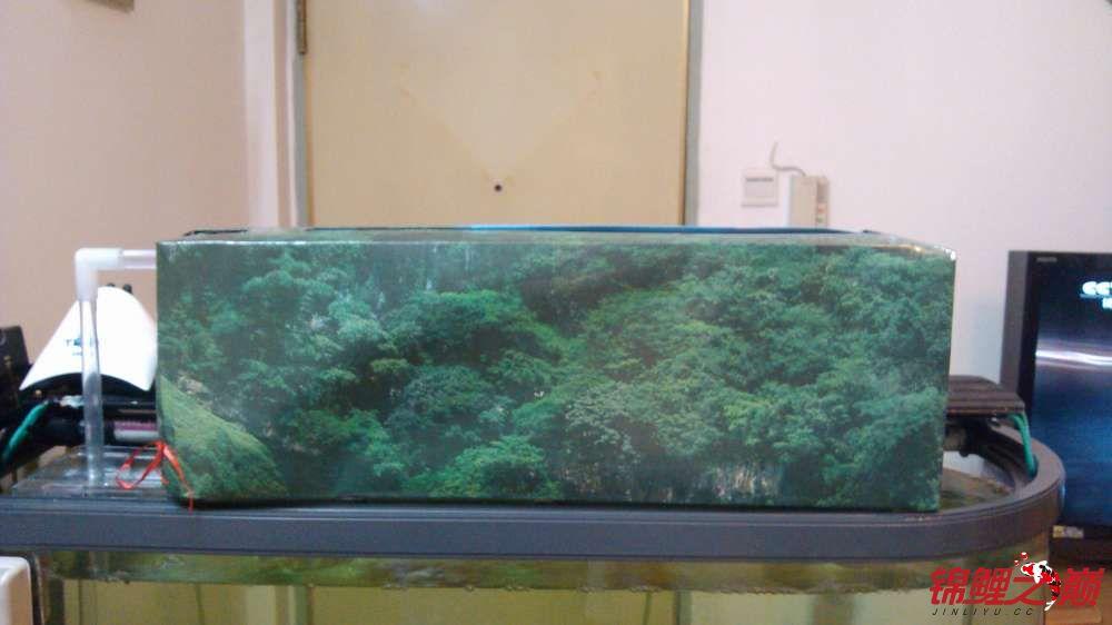 【西安泰虎鱼】滴滤盒加外套 西安龙鱼论坛 西安博特第3张