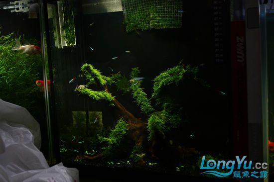 历时半个月我的1506080白色松木超白基本完工大家欣赏 西安观赏鱼信息 西安博特第13张