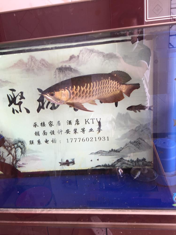 14个月的宝石 西安观赏鱼信息