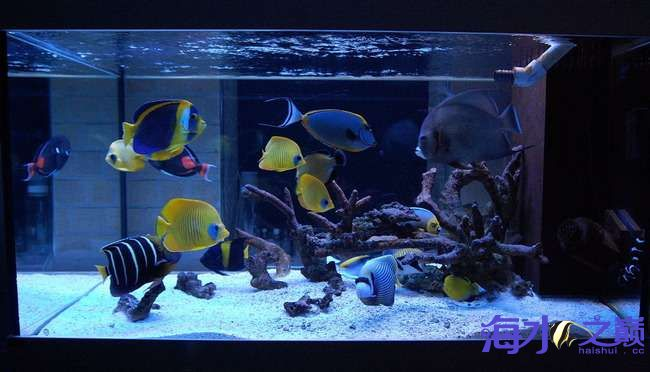 海巅周年庆 展示FOT 西安龙鱼论坛 西安博特第2张