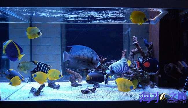 海巅周年庆 展示FOT 西安龙鱼论坛 西安博特第3张