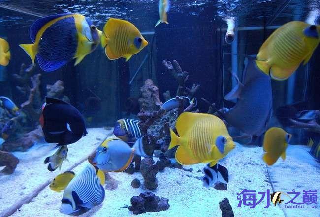 海巅周年庆 展示FOT 西安龙鱼论坛 西安博特第5张