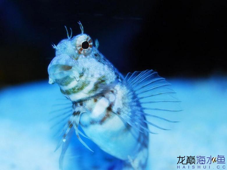 西瓜刨也能拍出美照? 西安龙鱼论坛 西安博特第1张