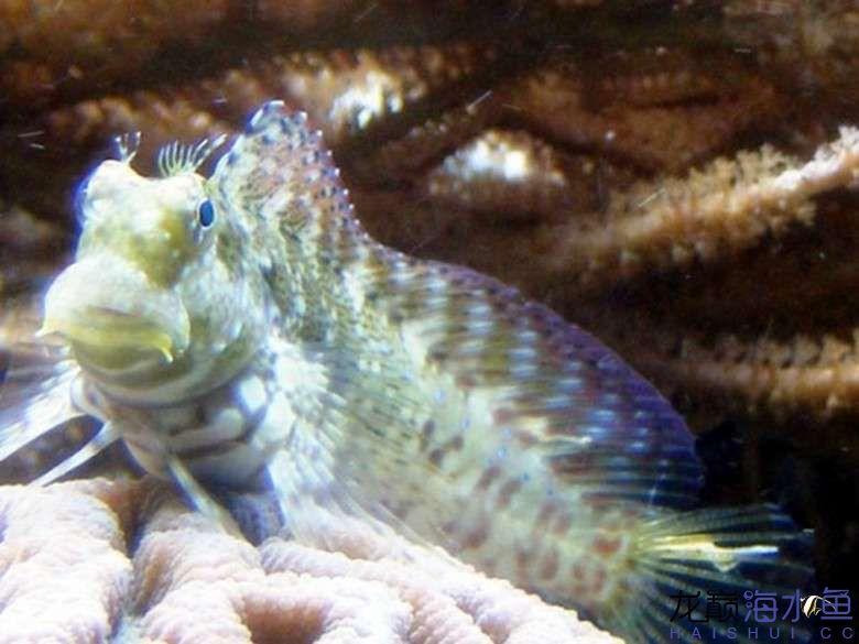 西瓜刨也能拍出美照? 西安龙鱼论坛 西安博特第3张