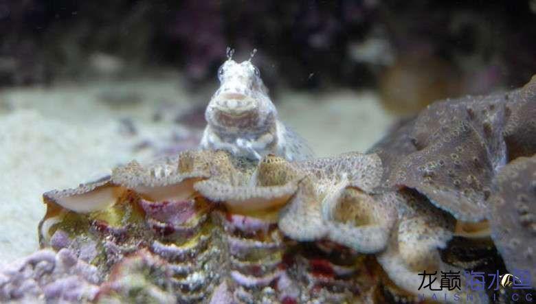 西瓜刨也能拍出美照? 西安龙鱼论坛 西安博特第4张