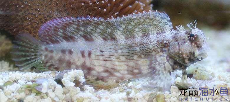 西瓜刨也能拍出美照? 西安龙鱼论坛 西安博特第6张
