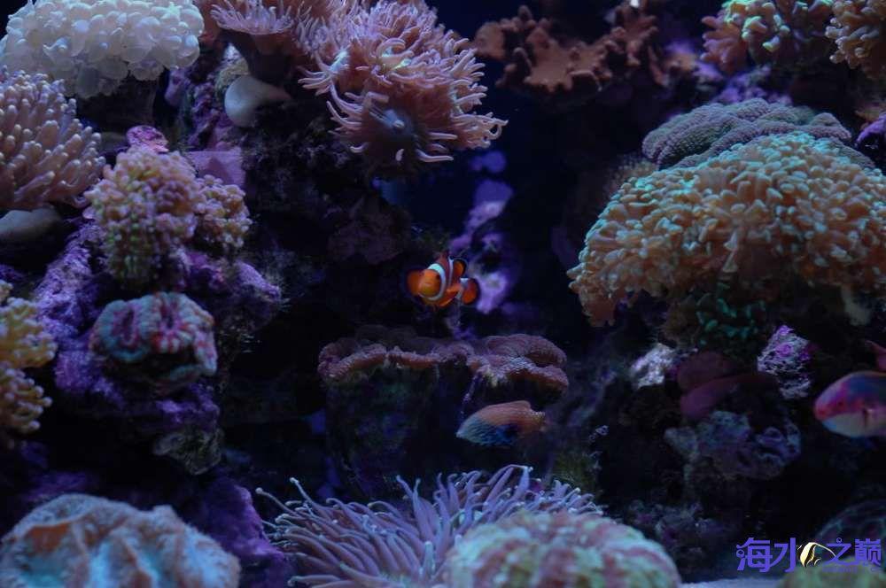 蛙卵和脑珊瑚 西安观赏鱼信息 西安博特第1张