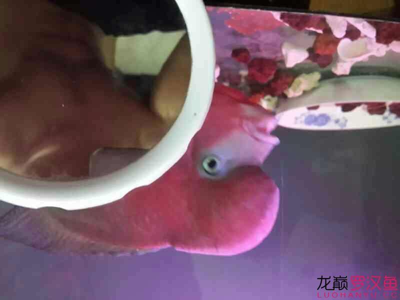家里用电蚊香液的鱼友注意了 西安龙鱼论坛 西安博特第4张