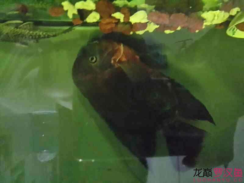 家里用电蚊香液的鱼友注意了 西安龙鱼论坛 西安博特第5张