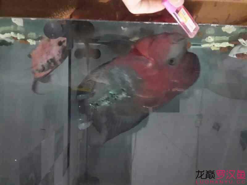 家里用电蚊香液的鱼友注意了 西安龙鱼论坛 西安博特第6张