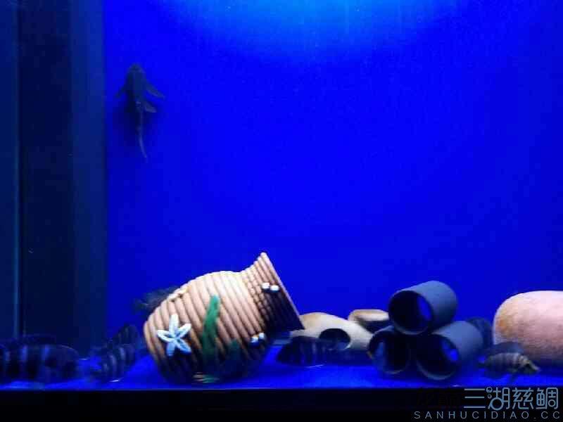 枫之谷+ 夜里突然开灯的后果 西安观赏鱼信息 西安博特第1张