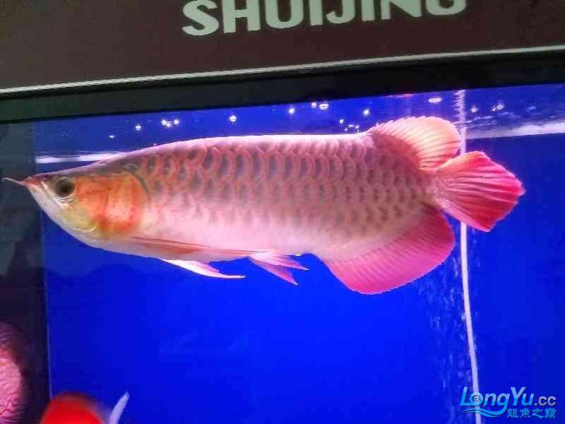 晒晒鱼 西安观赏鱼信息 西安博特第1张
