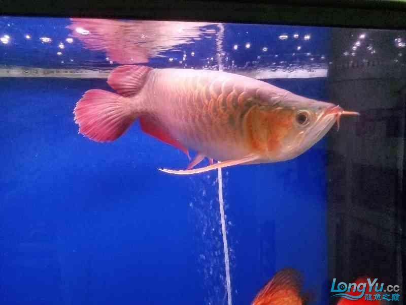 晒晒鱼 西安观赏鱼信息 西安博特第2张