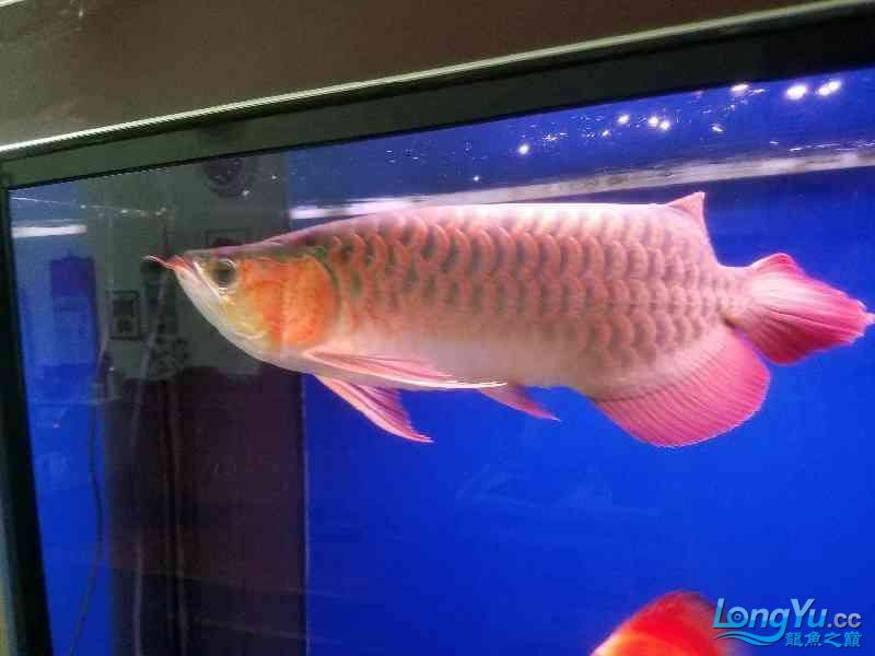 晒晒鱼 西安观赏鱼信息 西安博特第4张