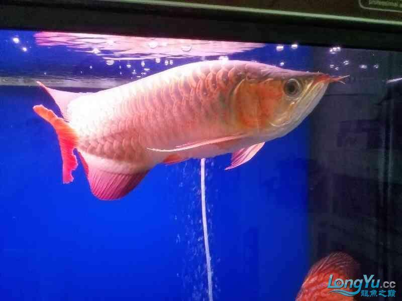 晒晒鱼 西安观赏鱼信息 西安博特第3张