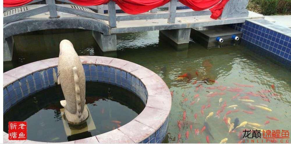 池景1 西安观赏鱼信息 西安博特第1张