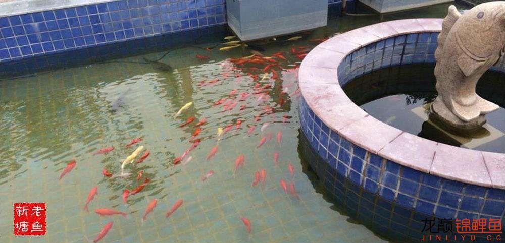 池景1 西安观赏鱼信息 西安博特第2张