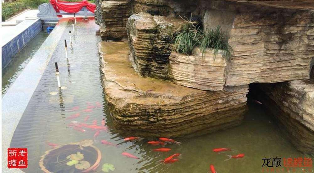 池景1 西安观赏鱼信息 西安博特第3张