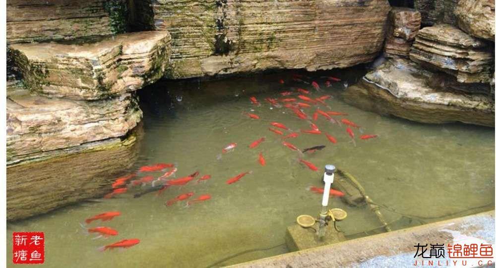 池景1 西安观赏鱼信息 西安博特第4张