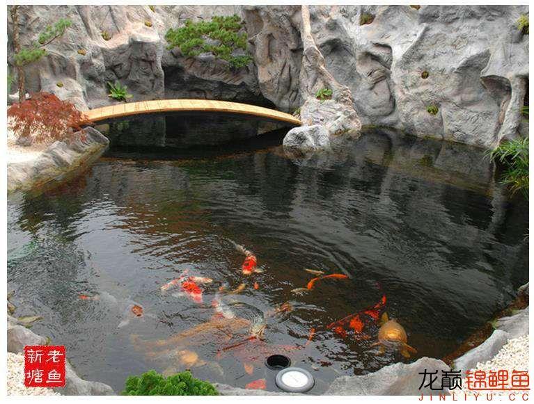 池景1 西安观赏鱼信息 西安博特第5张