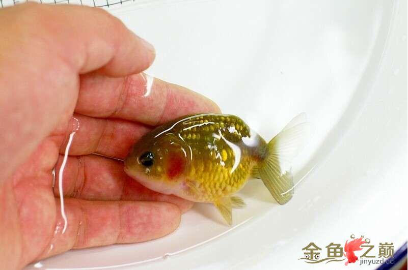 我的小宝贝回来了 西安观赏鱼信息 西安博特第1张