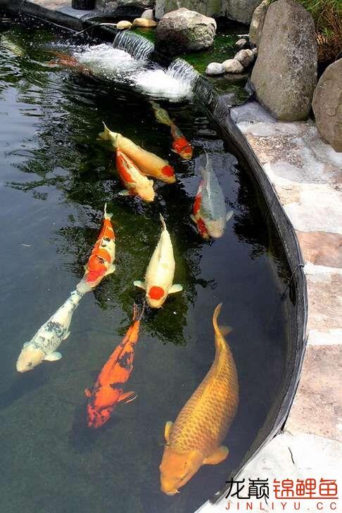 看锦鲤美图庆周末快乐 西安龙鱼论坛 西安博特第6张