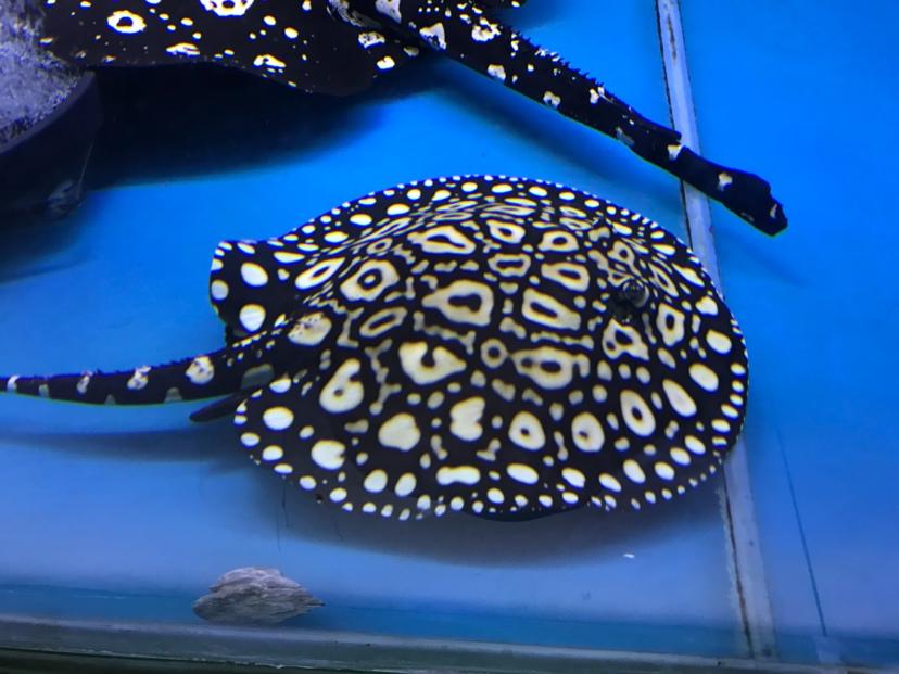 出生一年的变化 西安观赏鱼信息 西安博特第3张