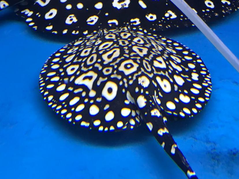 出生一年的变化 西安观赏鱼信息 西安博特第4张