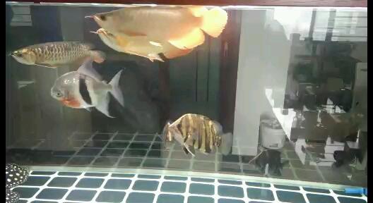 喂食鱼种混养 西安龙鱼论坛 西安博特第1张